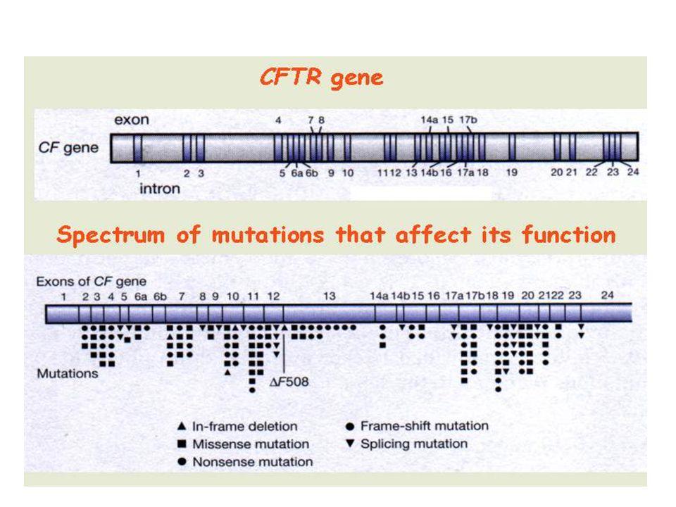 MutaceCFTRgenu Mutace CFTR genu mutace jsou germinální (ve všech buňkách jedince) somatické nebyly dosud popsány ancestrální povaha mutací - přenášeny z generace na generaci mutace de novo – velmi vzácně distribuce mutací je populačně specifická