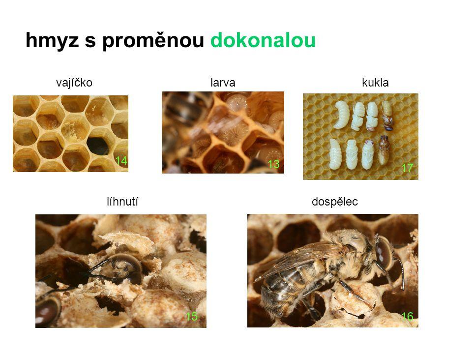 larva líhnutídospělec hmyz s proměnou dokonalou kuklavajíčko 15 16 14 13 17