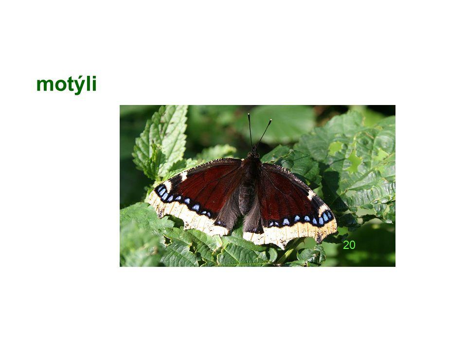 motýli 20