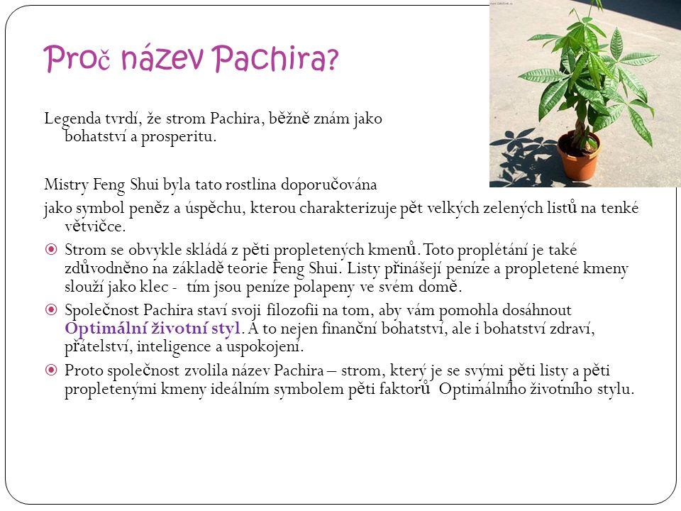 Pro č název Pachira? Legenda tvrdí, že strom Pachira, b ě žn ě znám jako strom pen ě z, p ř ináší bohatství a prosperitu. Mistry Feng Shui byla tato r