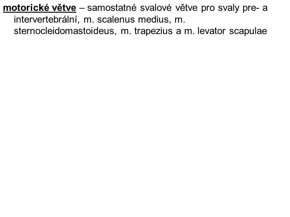 Ansa cervicalis (profunda) (C1–3) – (ansa n.