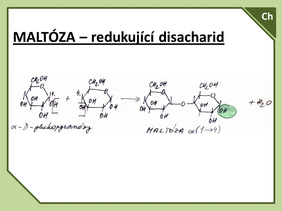 SA A Ch MALTÓZA – redukující disacharid