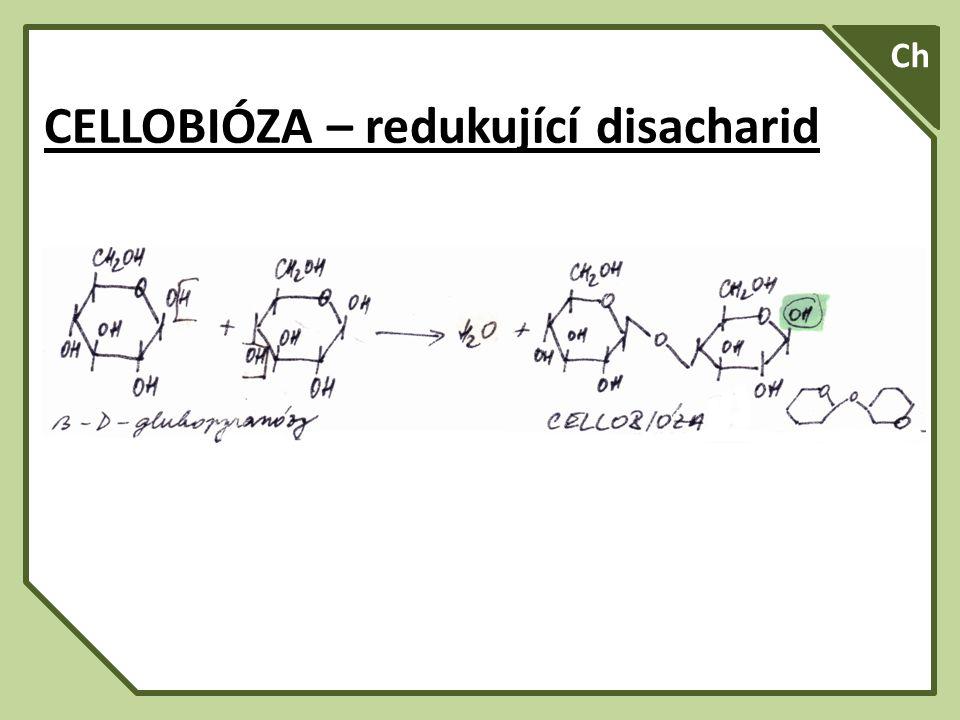 SA A Ch CELLOBIÓZA – redukující disacharid
