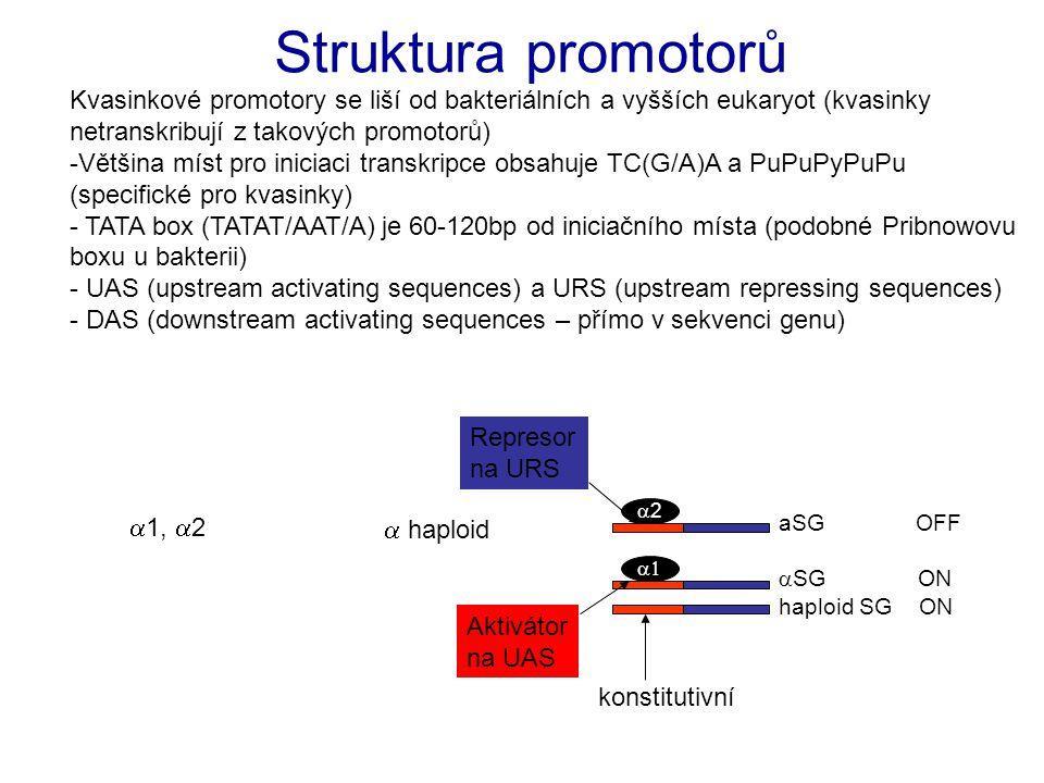 - Pouze GAL5 gen je konstitutivně exprimován (potřebný pro metabolismus glukózy) - všechny ostatní jsou indukovány růstem na galaktóze a reprimovány glukozou - GAL1, GAL7 a GAL10 geny jsou v klastru na chromosomu 2 - GAL4 gen kóduje transkripční faktor (aktivátor), který se váže na UAS těchto genů Regulace metabolické dráhy galaktózy gal mutanty …
