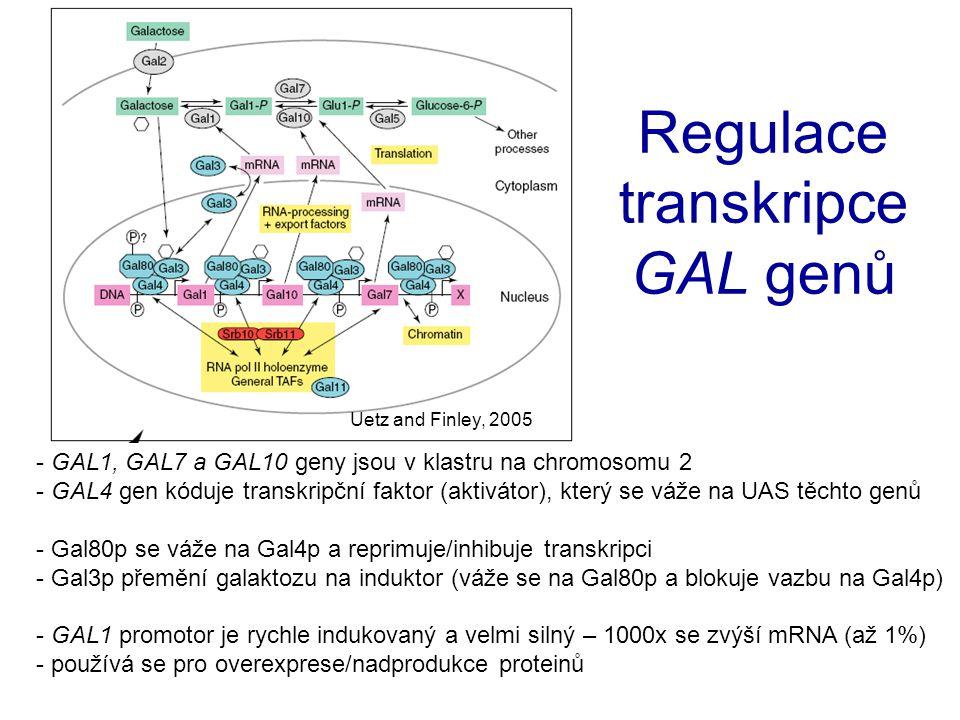 Transkripční aktivátor Gal4p Transkripční komplex CO Biotech (1995) p. 59