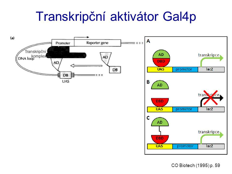 Klasický dvojhybridní systém Trojhybridní systém – heterotrimerní proteinové komplexy - posttranslační modifikace Trojhybridní systém - proteinový inhibitor interakce Trojhybridní systém – RNA interakce - ligand/receptor