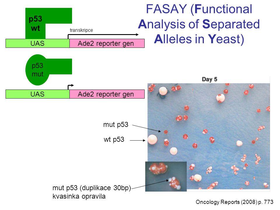 Vazba ligand-receptor (Y3H) FK506 PNAS (1996) p.