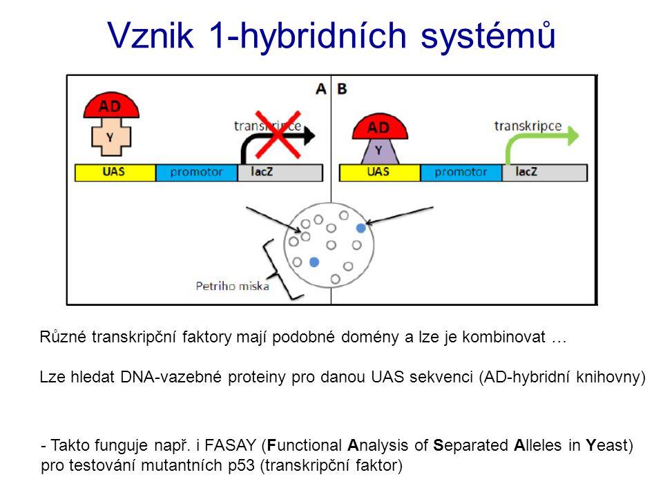 Vznik 1-hybridních systémů - Takto funguje např. i FASAY (Functional Analysis of Separated Alleles in Yeast) pro testování mutantních p53 (transkripčn