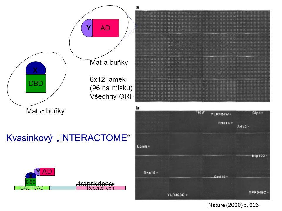 "Nature (2000) p. 623 Y X DBD AD Mat a buňky 8x12 jamek (96 na misku) Všechny ORF Mat  buňky Y X Reporter genGAL1 UAS transkripce DBD AD Kvasinkový """