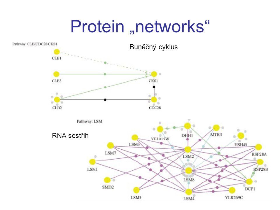 """Protein """"networks"""" RNA sestřih Buněčný cyklus"""