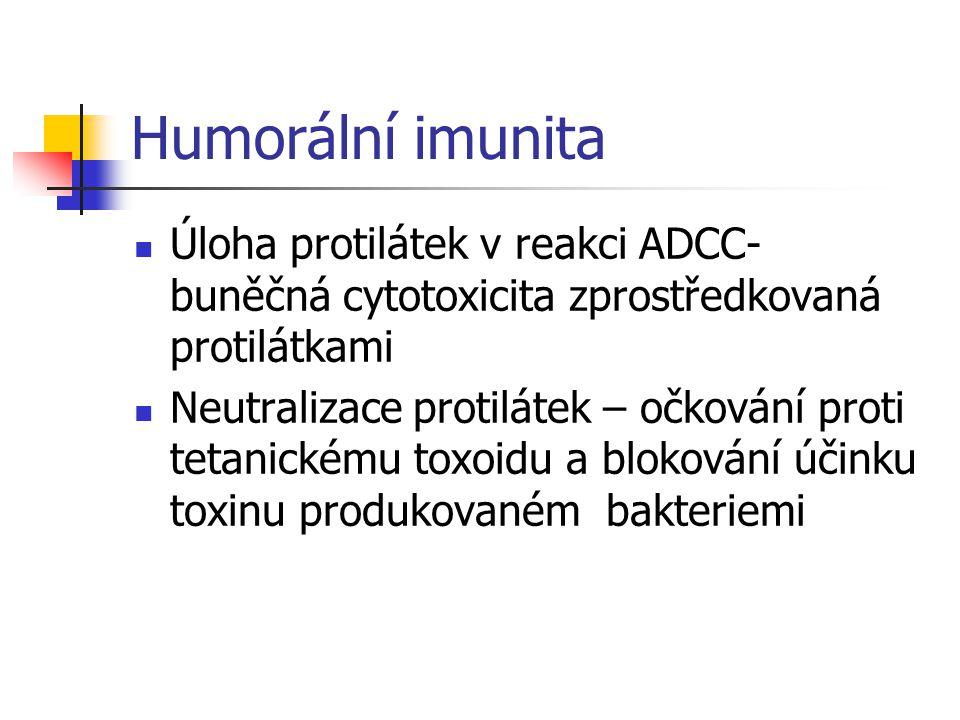 Humorální imunita Úloha protilátek v reakci ADCC- buněčná cytotoxicita zprostředkovaná protilátkami Neutralizace protilátek – očkování proti tetanickému toxoidu a blokování účinku toxinu produkovaném bakteriemi
