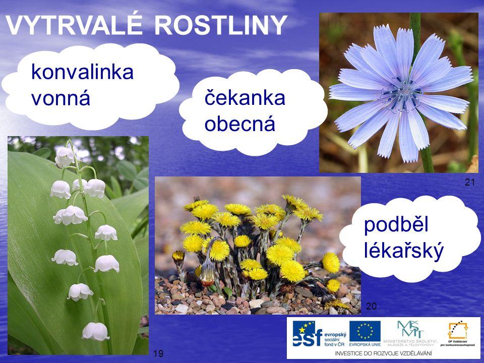 ● víceleté rostliny ● několikrát kvetou a mají semena VYTRVALÉ ROSTLINY