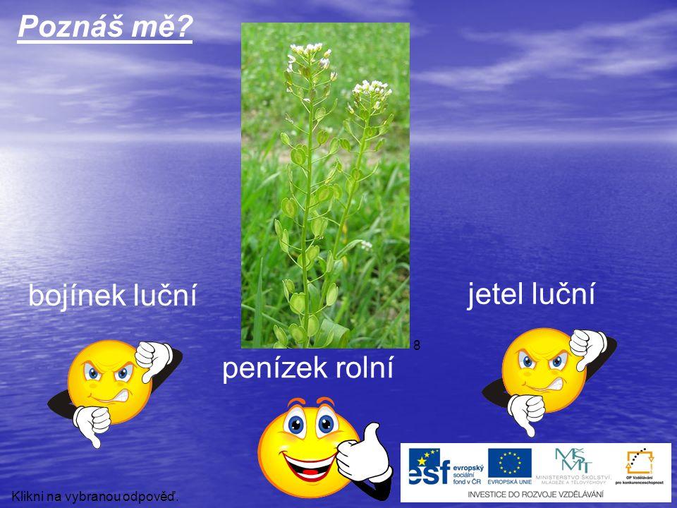 mateřídouška levandule lékařská hyacint Poznáš mě? Klikni na vybranou odpověď. 23