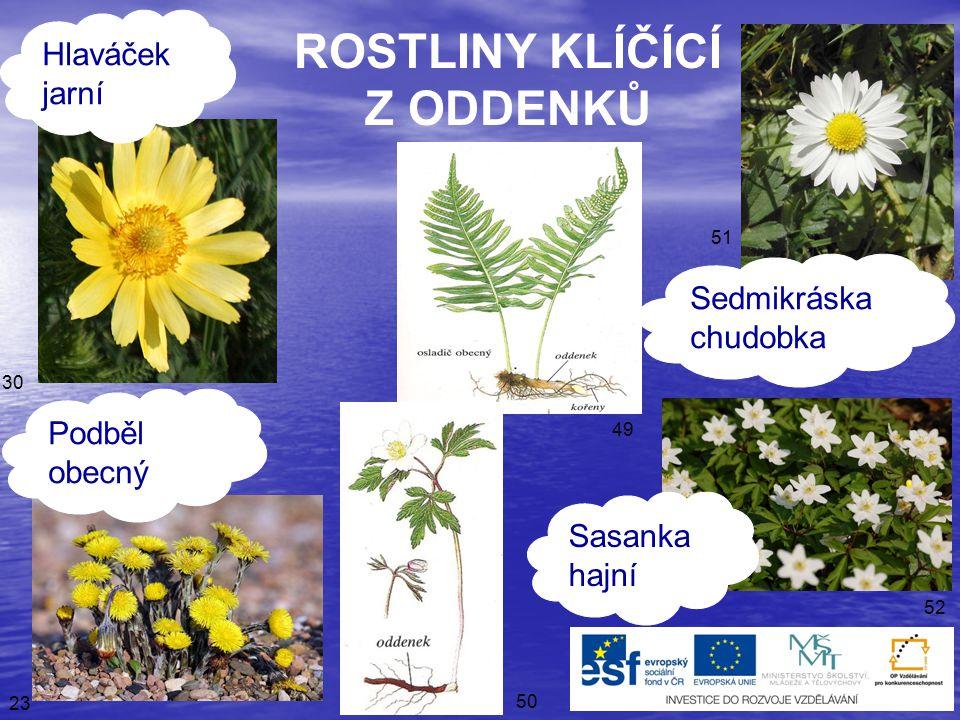 43 48 47 46 45 44 ROSTLINY KLÍČÍCÍ Z HLÍZ Orsej jarní Ocún jesenní Šafrán karpatský Lilek brambor
