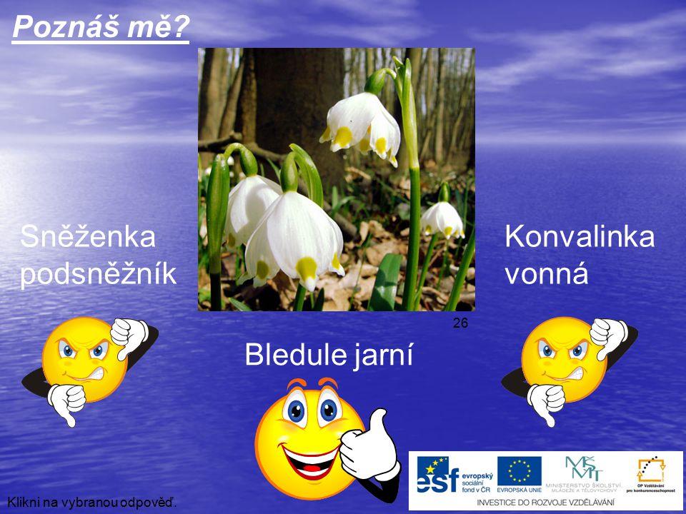 Tulipán Lilie cibulkonosná Poznáš mě? Klikni na vybranou odpověď. Vlčí mák 41