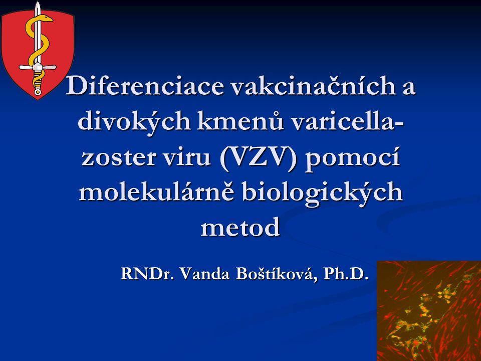 Diferenciace vakcinačních a divokých kmenů varicella- zoster viru (VZV) pomocí molekulárně biologických metod Diferenciace vakcinačních a divokých kmenů varicella- zoster viru (VZV) pomocí molekulárně biologických metod RNDr.