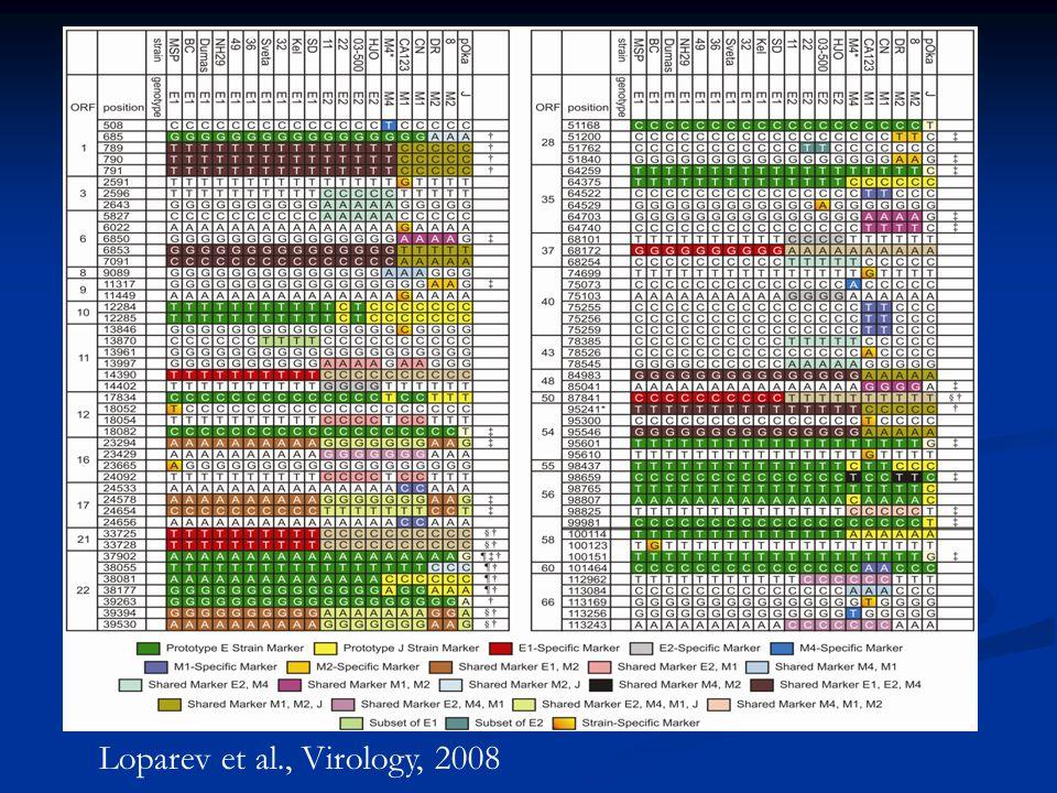 Loparev et al., Virology, 2008