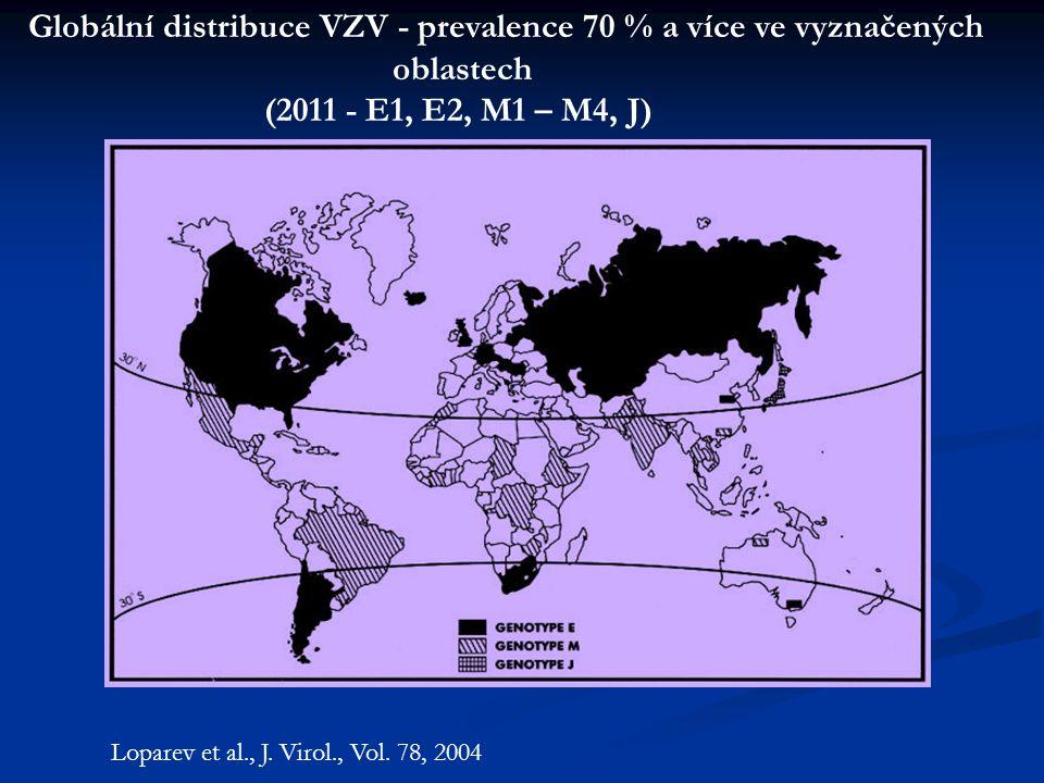 Loparev et al., J. Virol., Vol. 78, 2004 Globální distribuce VZV - prevalence 70 % a více ve vyznačených oblastech (2011 - E1, E2, M1 – M4, J)