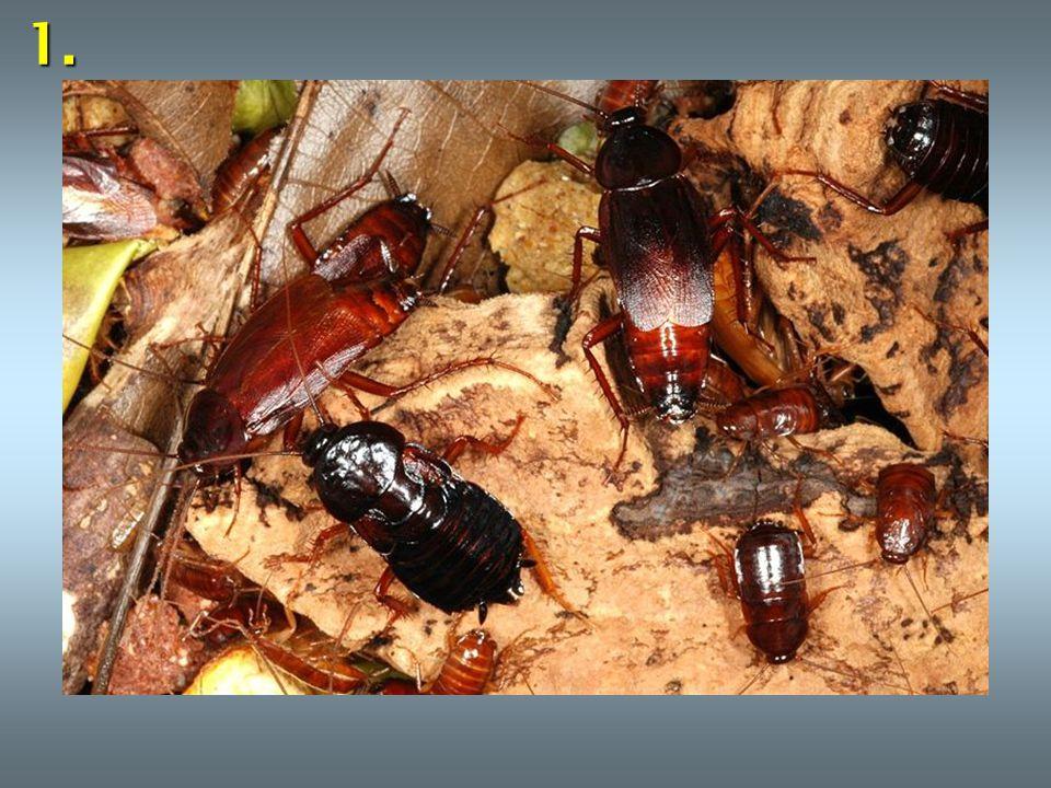 Ř ešení : 1.šváb obecný 2. kobylka zelená 3. vážka 4.