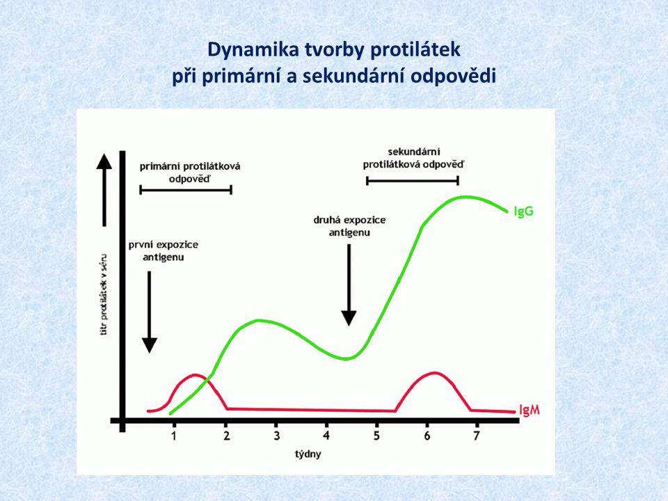 Dynamika tvorby protilátek při primární a sekundární odpovědi