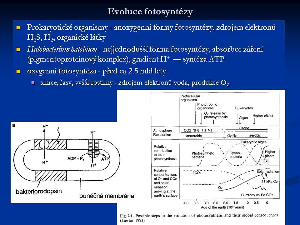 Evoluce fotosyntézy Prokaryotické organismy - anoxygenní formy fotosyntézy, zdrojem elektronů H 2 S, H 2, organické látky Prokaryotické organismy - an