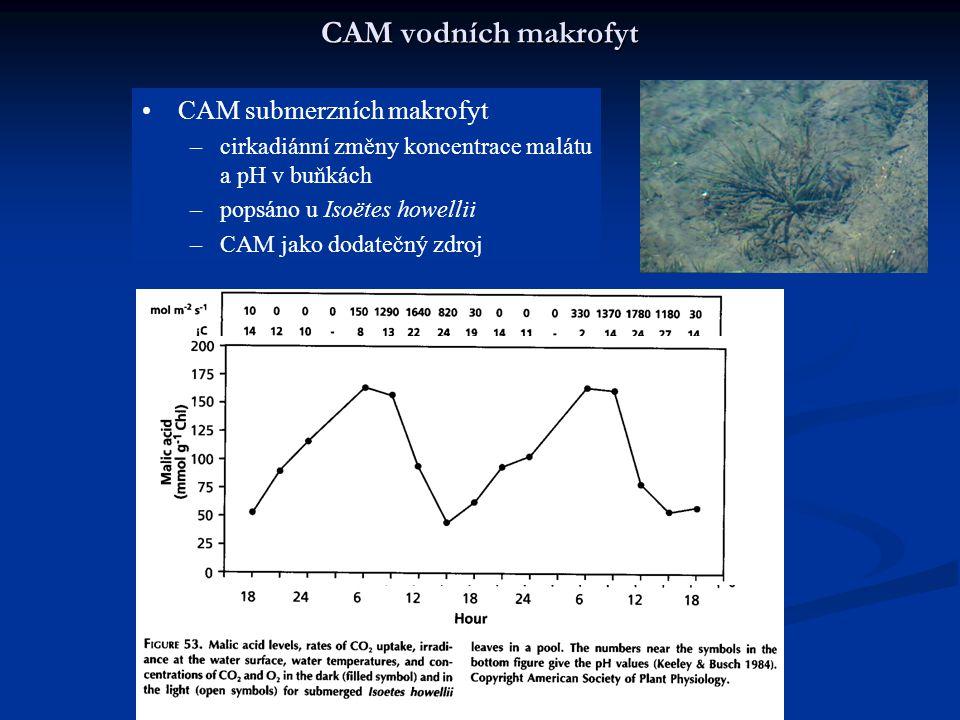 CAM vodních makrofyt CAM submerzních makrofyt –cirkadiánní změny koncentrace malátu a pH v buňkách –popsáno u Isoëtes howellii –CAM jako dodatečný zdr