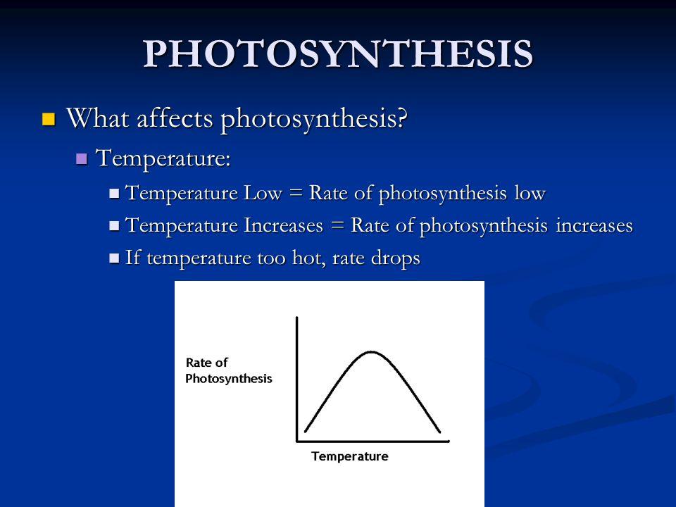 Ekologie fotosyntézy - sluneční záření Heliofyty vs.