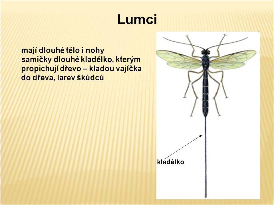 Lumci - mají dlouhé tělo i nohy - samičky dlouhé kladélko, kterým propichují dřevo – kladou vajíčka do dřeva, larev škůdců kladélko