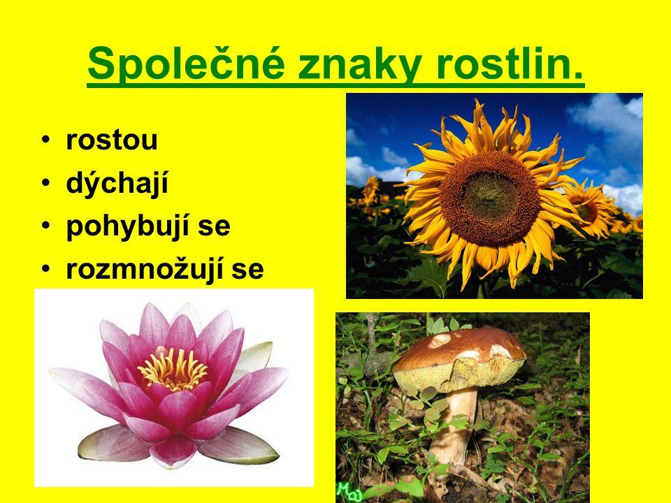 Společné znaky rostlin. rostou dýchají pohybují se rozmnožují se