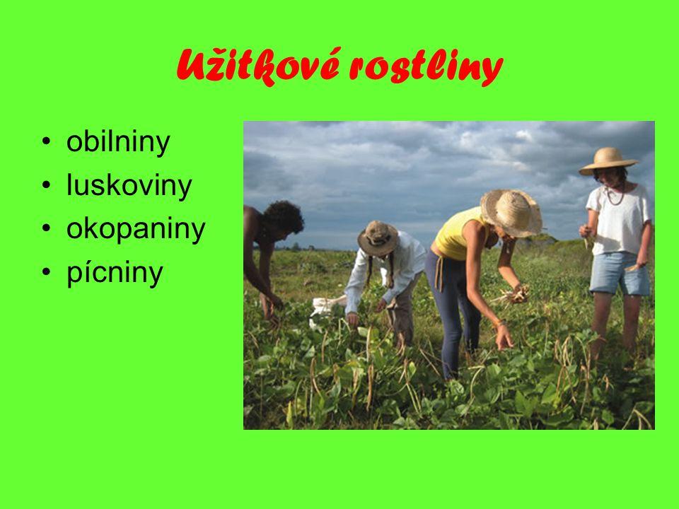 Užitkové rostliny obilniny luskoviny okopaniny pícniny