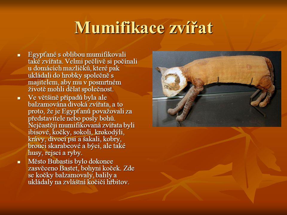 Mumifikace zvířat Egypťané s oblibou mumifikovali také zvířata.