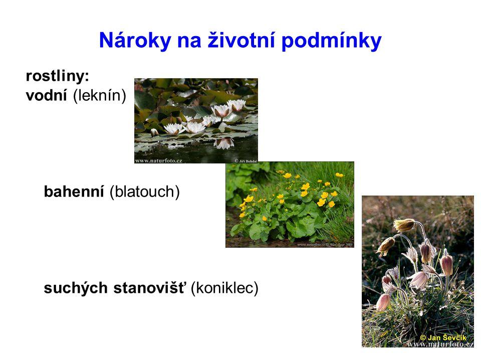 Nároky na životní podmínky rostliny: vodní (leknín) bahenní (blatouch) suchých stanovišť (koniklec)