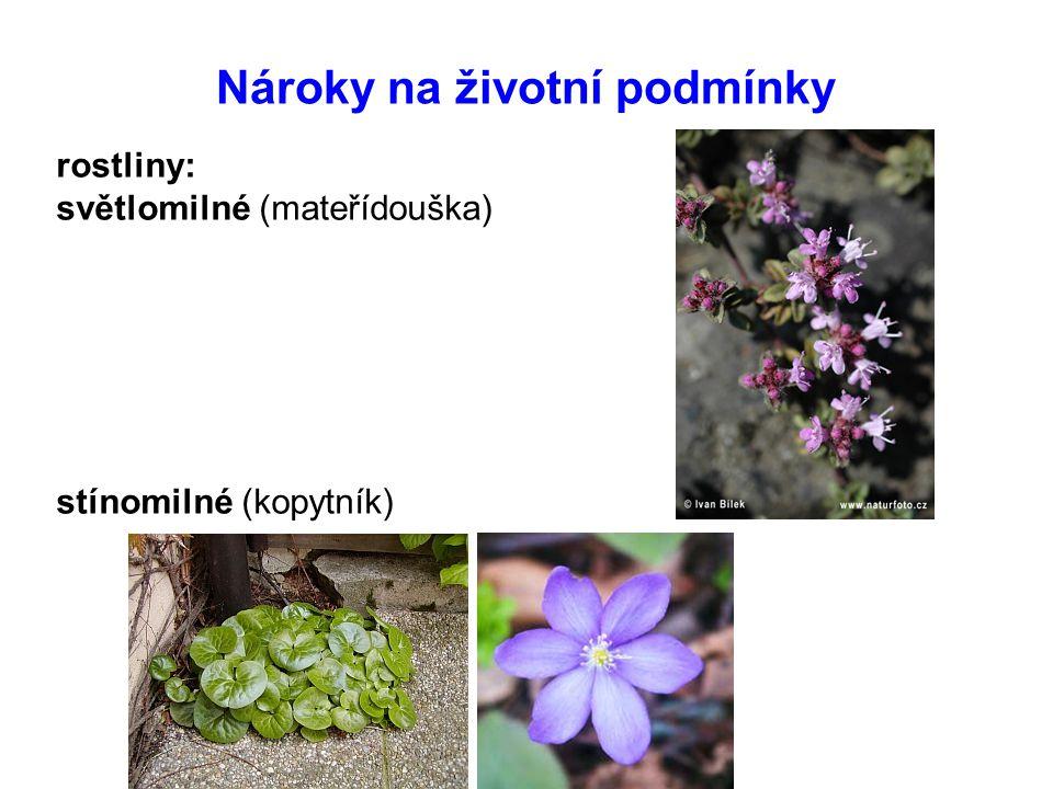 Nároky na životní podmínky rostliny: světlomilné (mateřídouška) stínomilné (kopytník)