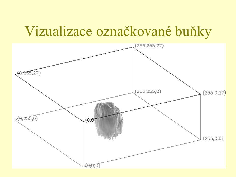 24 Vizualizace označkované buňky