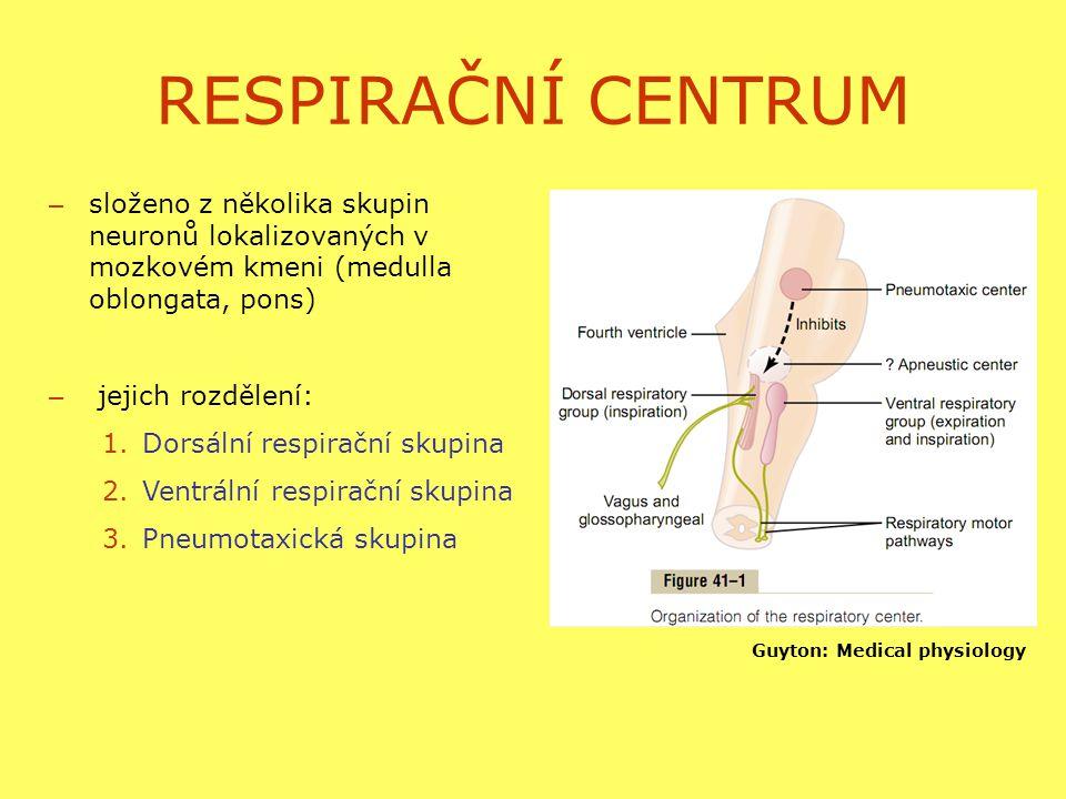 RESPIRAČNÍ CENTRUM – složeno z několika skupin neuronů lokalizovaných v mozkovém kmeni (medulla oblongata, pons) – jejich rozdělení: 1.Dorsální respirační skupina 2.Ventrální respirační skupina 3.Pneumotaxická skupina Guyton: Medical physiology
