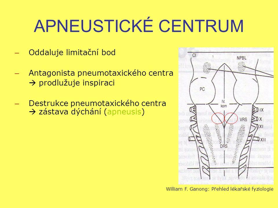 APNEUSTICKÉ CENTRUM – Oddaluje limitační bod – Antagonista pneumotaxického centra  prodlužuje inspiraci – Destrukce pneumotaxického centra  zástava dýchání (apneusis) William F.