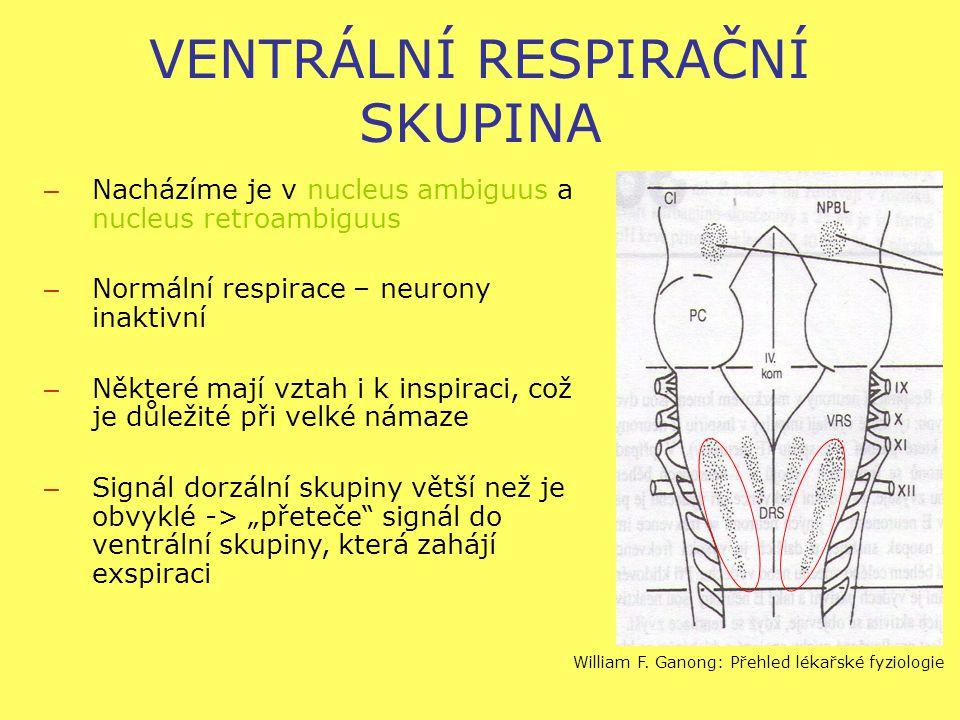 """VENTRÁLNÍ RESPIRAČNÍ SKUPINA – Nacházíme je v nucleus ambiguus a nucleus retroambiguus – Normální respirace – neurony inaktivní – Některé mají vztah i k inspiraci, což je důležité při velké námaze – Signál dorzální skupiny větší než je obvyklé -> """"přeteče signál do ventrální skupiny, která zahájí exspiraci William F."""