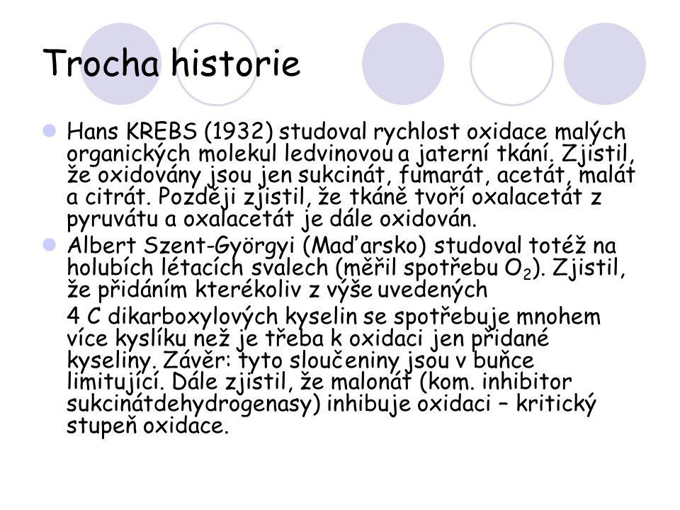 Trocha historie Hans KREBS (1932) studoval rychlost oxidace malých organických molekul ledvinovou a jaterní tkání. Zjistil, že oxidovány jsou jen sukc