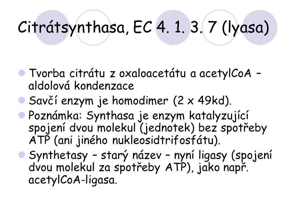 Citrátsynthasa, EC 4. 1. 3. 7 (lyasa) Tvorba citrátu z oxaloacetátu a acetylCoA – aldolová kondenzace Savčí enzym je homodimer (2 x 49kd). Poznámka: S