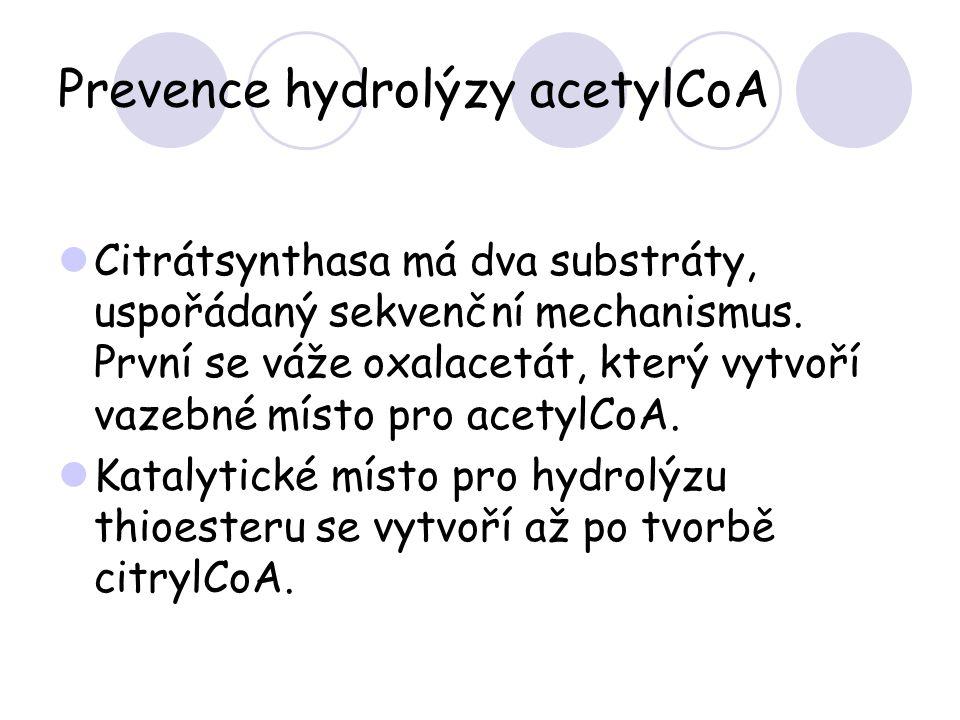 Prevence hydrolýzy acetylCoA Citrátsynthasa má dva substráty, uspořádaný sekvenční mechanismus. První se váže oxalacetát, který vytvoří vazebné místo