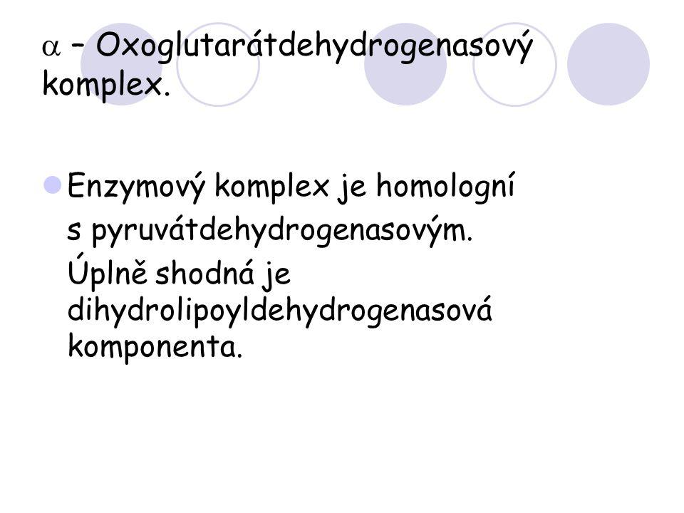  – Oxoglutarátdehydrogenasový komplex. Enzymový komplex je homologní s pyruvátdehydrogenasovým. Úplně shodná je dihydrolipoyldehydrogenasová komponen