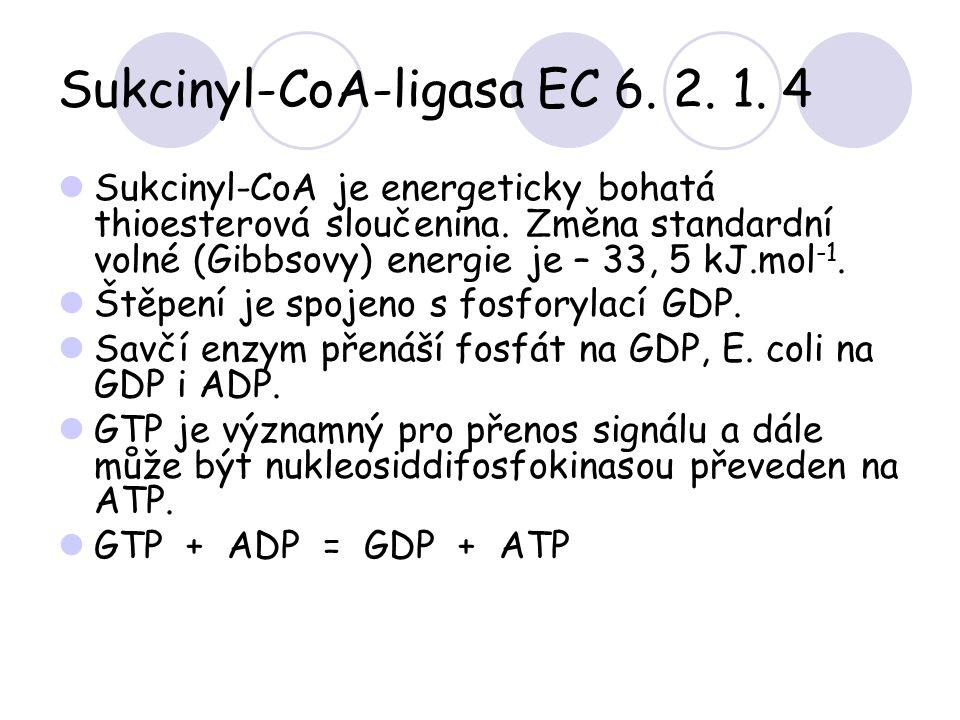 Sukcinyl-CoA-ligasa EC 6. 2. 1. 4 Sukcinyl-CoA je energeticky bohatá thioesterová sloučenina. Změna standardní volné (Gibbsovy) energie je – 33, 5 kJ.