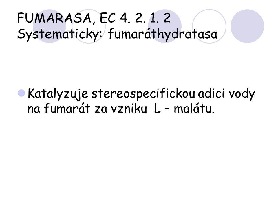 FUMARASA, EC 4. 2. 1. 2 Systematicky: fumaráthydratasa Katalyzuje stereospecifickou adici vody na fumarát za vzniku L – malátu.