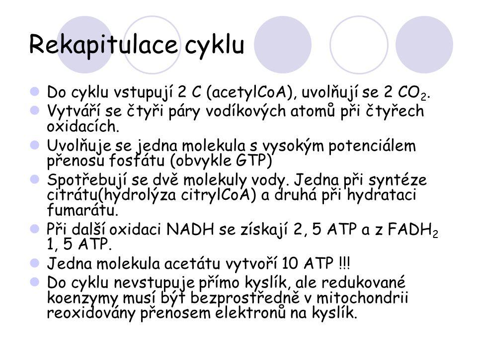 Rekapitulace cyklu Do cyklu vstupují 2 C (acetylCoA), uvolňují se 2 CO 2. Vytváří se čtyři páry vodíkových atomů při čtyřech oxidacích. Uvolňuje se je
