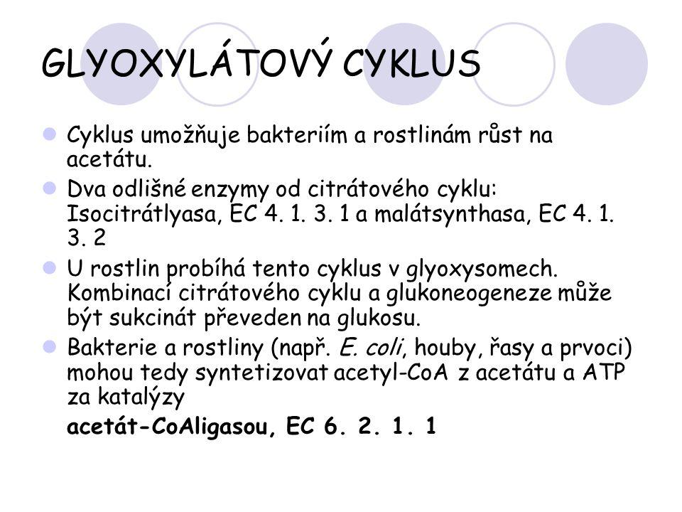 GLYOXYLÁTOVÝ CYKLUS Cyklus umožňuje bakteriím a rostlinám růst na acetátu. Dva odlišné enzymy od citrátového cyklu: Isocitrátlyasa, EC 4. 1. 3. 1 a ma