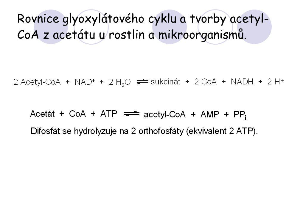 Rovnice glyoxylátového cyklu a tvorby acetyl- CoA z acetátu u rostlin a mikroorganismů.
