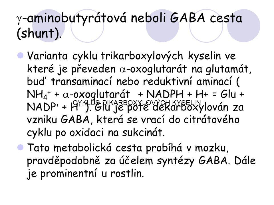  -aminobutyrátová neboli GABA cesta (shunt). Varianta cyklu trikarboxylových kyselin ve které je převeden  -oxoglutarát na glutamát, buď transaminac