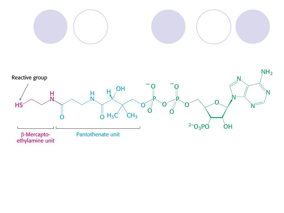 Rekapitulace cyklu Do cyklu vstupují 2 C (acetylCoA), uvolňují se 2 CO 2.