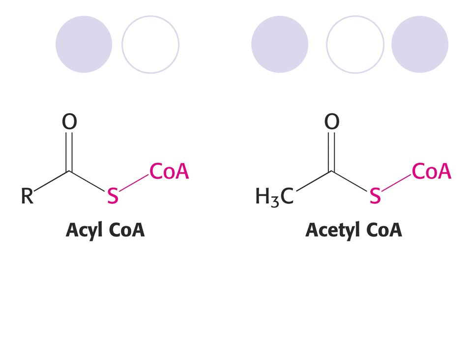 SUKCINÁTDEHYDROGENASA EC 1.3. 5. 1 systematicky: sukcinát:ubichinonoxidoreduktasa.