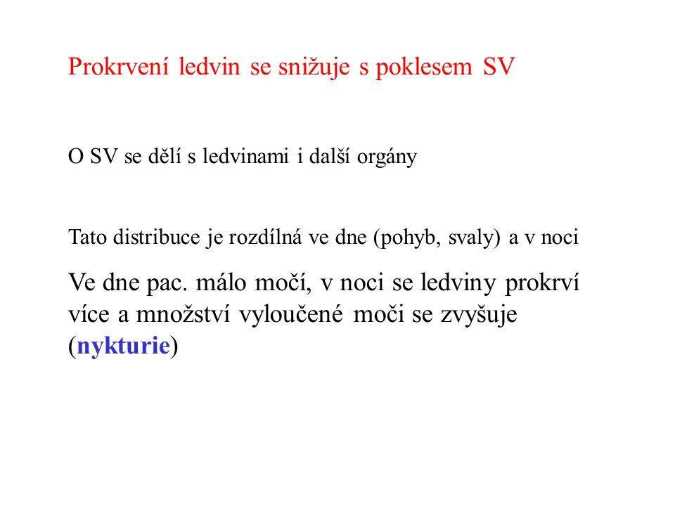EDV 1 Konec diastoly 1